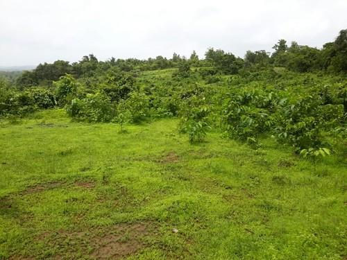 Arable land for sale at Daystar university (40M per acre)