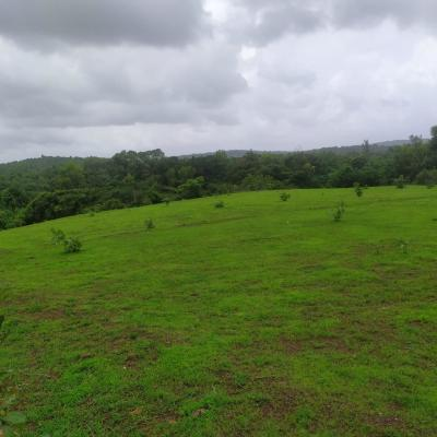 Grass covered 3.5 acre Land+ colonial mega house for sale in Kitisuru