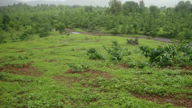 Grassy land for sale at Daystar university (40M per acre)